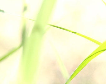 Spring. lying on a carpet of grass. photography, photo print