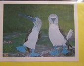 Blue Footed Booby Bird Birthday Card,  4 x 6  with matching envelope