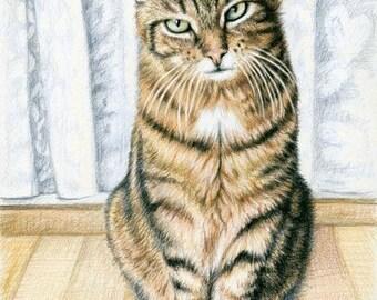 Room Tiger - Fine Art Print