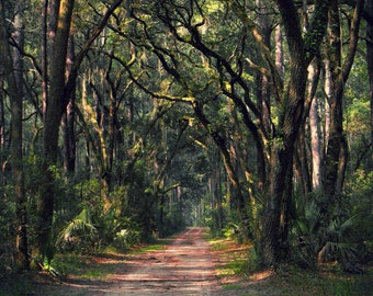 Carolina Escape I -Mossy Forest with Winding Road - Wrapped Canvas Print (8x10, 11x14,12x18, 16x20,18x24) Bluffton, South Carolina