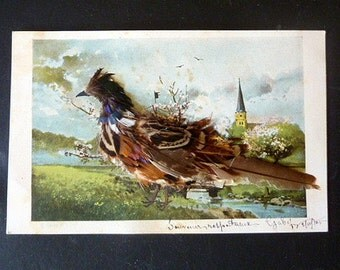 Vintage french fancy 3D postcard ,A Pheasant with Real Feathers