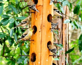 The best finch attracting wooden bird feeder we make - large bird feeder specifically designed for feeding flocks of finches and songbirds