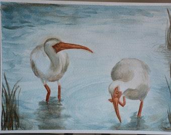 Ibis Buddies - Original Watercolor Painting
