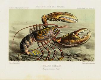 1868 Antique lobster lithograph,  original antique crustacean print
