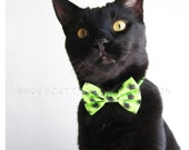 SALE!  Cat Bow Tie - Spidey Sense - Halloween Cat Accessory