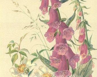 Antique Print FLOWERS Fox Glove Trailing Rose Edwardian chart beautiful wall art vintage color lithograph illustration 1970 garden