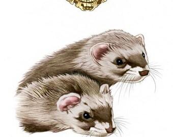 Beastmaster's Kodo and Podo Ferrets Limited Edition Art Print by Ryan Berkley