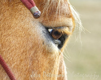 Horse photography, Farm animal photos, close up horse eye, Brown Tan Green Red Home Decor Rustic country photos nature equine wall art 11x14