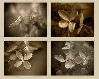 Hydrangea Print Set, Rustic Decor, Sepia Photography, Still Life Flower Photo Set, Abstract Wall Decor, Floral Art Prints
