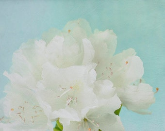 White Flower Print,  Rhododendron Flower Photography, Floral Art Print, White Blue Wall Decor, Cottage Chic