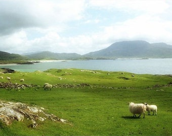 Ireland Photography , Irish Landscape,  Sheep Art, Ocean Wall Decor, Nautical Decor, Beach Print,