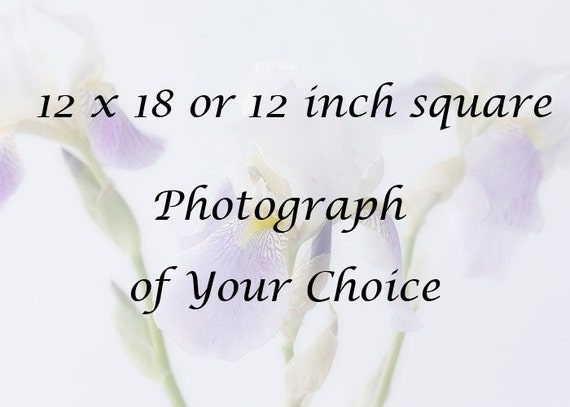 12 x 12, 12 x 18 inch Photograph of Your Choice
