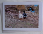 Photo Card Mallard and Pekin Ducks