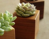Cactus Planter - Succulent Pot - Wedding Favor - Square