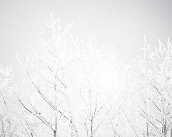 Winter photography, icy brances, sunrise, flare, black and white, December, Montreal, frost, ice and snow, neutrals, rustic decor