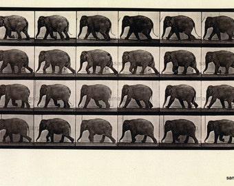 Elephant Locomotion Chart Black and White Eadweard Muybridge Digital Download