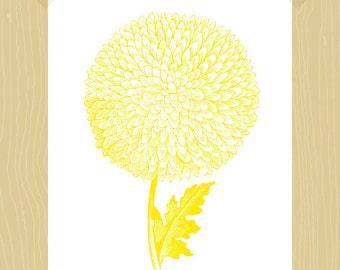 Chrysanthemum Printable 5 x 7 Mum Yellow Flower Victorian Botanic Art Gardening Fall Flower Gold Wall Art Victorian Flower Drawing