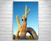 Fine Art Photography, Desert Art, Arizona, Cactus Art, Tucson, Sunsets, Ironwood Forest, Wall Print, Saguaro Art, Wall Picture, Unique Art