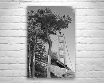 Tree Art, Fine Art Photography, Black and White Photography, Golden Gate, San Francisco Art, Monterey Cypress, California Art, MurrayBolesta