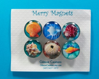 Set of Magnets   Fridge Magnets  Glass Magnets  Sea Shell Designs
