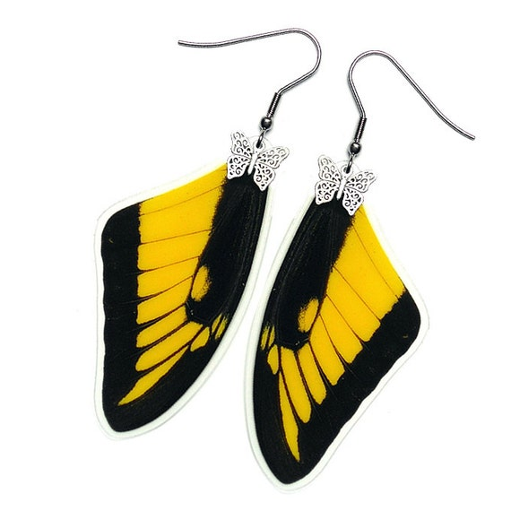 Real Butterfly Wing Earrings (Papilio Lycophron Forewing - E155)