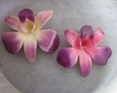 Real Orchid Jewelry - Pink and Purple Dendrobium Pendant - RESERVED for Suzi