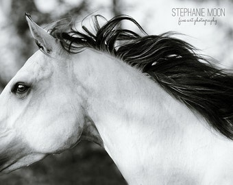 Black and White Fine Art Horse Photography,  fine art horse photo black and white, abstract horse photography, Horse Art, Horse Picture