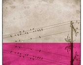 Bird photography Bathroom Print Bar Art, Nature Decor, Radiant Orchid, Birds on wire, Landscape Print, Wall Hanging, Wall art, On a wire