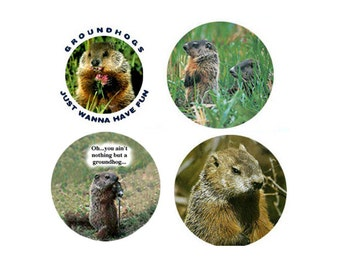 Groundhog  Magnets:  4 Great Groundhogs for your home, your collection,  or to give as a unique gift