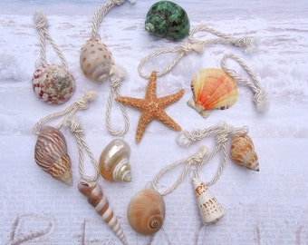Seashells Starfish Favors  - 18 Naturally Colorful Seashells and Starfish for Holiday Ornaments or Wedding Favors