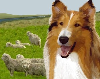The Drover's Dog - A Collie