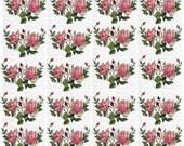 Instant Digital Download Cottage Pink Roses Catherine Klien Rose Buds Flowers Floral Vintage Era Transparent Background PNG - U Print ECS