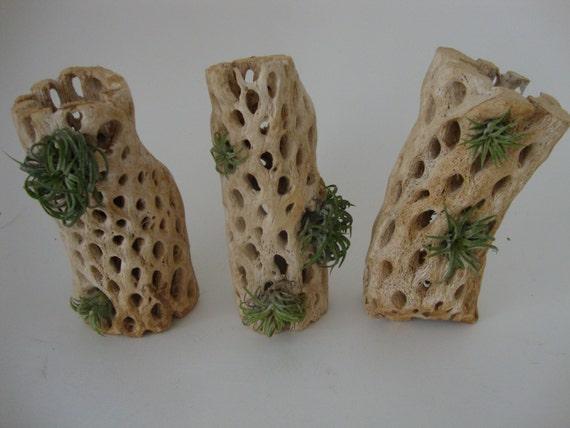 Cactus Seco Fabulous Escena Del Desierto De Cactus Que Representa