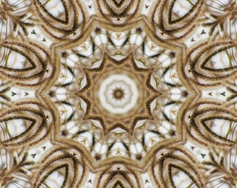Abstract photo, wall art,star,kaleidoscope effect