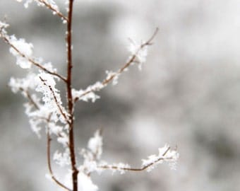 Winter Branch, Fresh Snow, Brown, White, Nature Photography, 8X10 Mat, Tree, Ready to Frame, Wall Art
