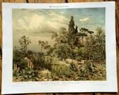1894 mediterranean flora plants original antique botanical print