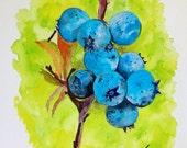"Original Watercolor Painting- ""Maine Native Blueberries"""