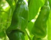 Peter Pepper Seeds Organic