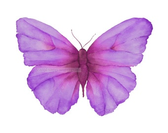 lilac butterfly giclee archival print by Carol Sapp