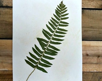 Real Pressed Christmas Fern Frond Botanical Specimen Art