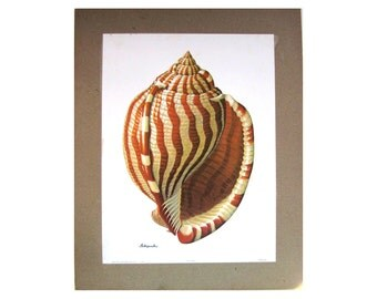 Seashell Wall Art On Etsy A Global Handmade And Vintage