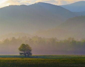 Foggy Morning Sunrise over a Field with an Oak Tree and Mountaings 8x10 Photography Print