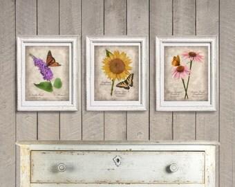Butterfly Botanical Prints - Set of Three 3 - Vintage Style Original Photograph -  Cottage Home Decor Garden Flowers Sunflower Coneflower