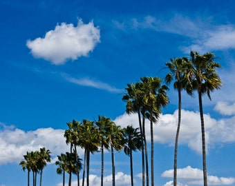 Palm Trees and Clouds in San Diego No. 661 - a Landscape Photograph