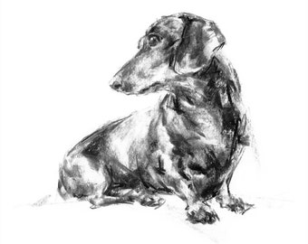 Dachshund Charcoal sketch, dog drawing - fine art dog print