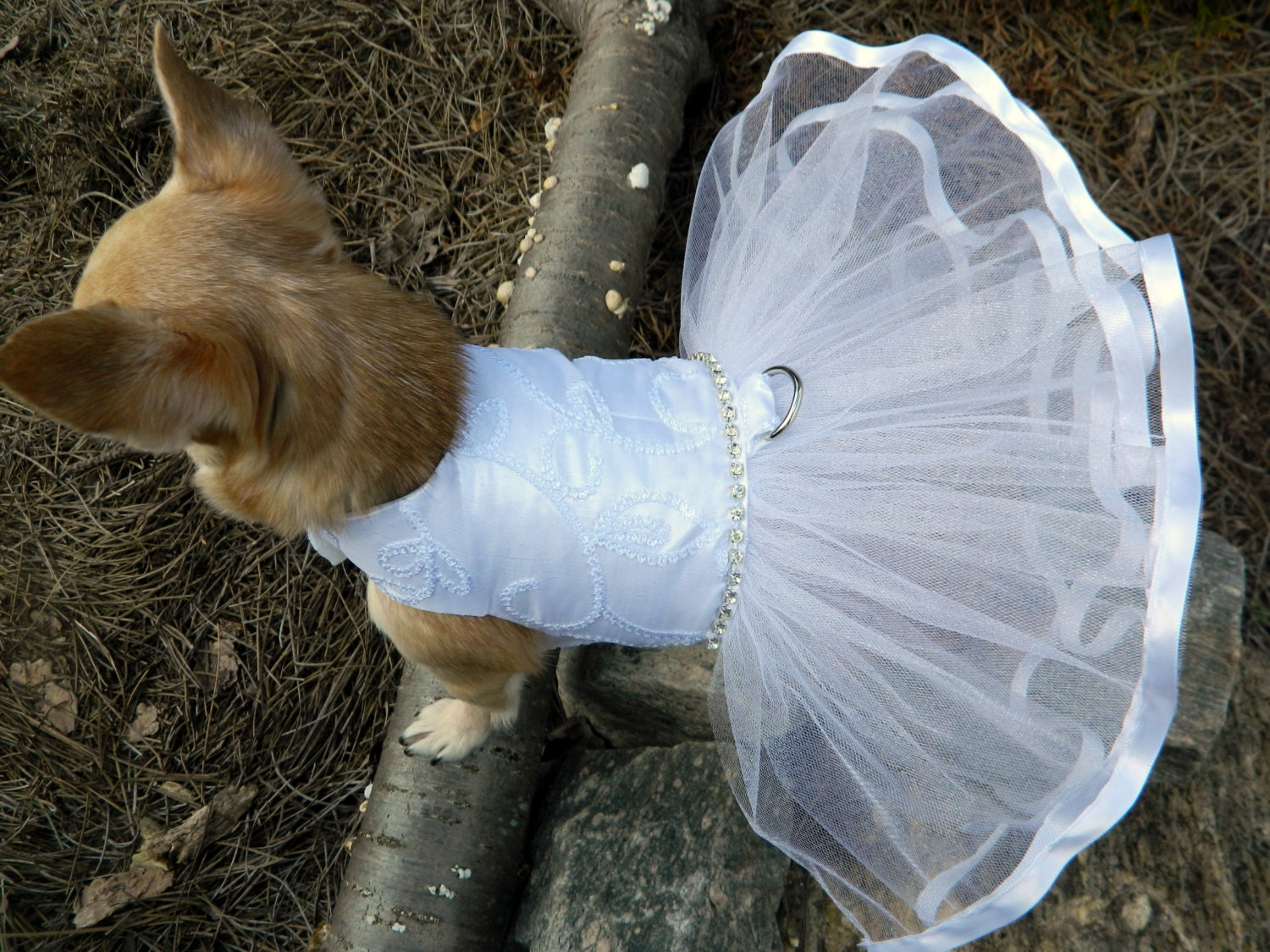Wedding Dog Dress Bridal Dog Dress Dog Wedding By Rufflerunway