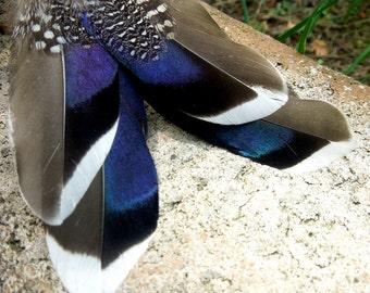Mallard earrings