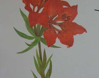 Western Series 1953 Wildflower Bookplate,Western Red Lily & Catalina Mariposa (Lavender) ,  Gorgeous Matte Cream  MORE in shop pairs singles