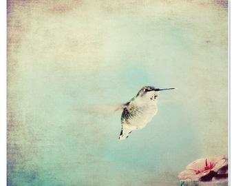 Animal photography, hummingbird, nature photography, fine art canvas, nursery decor, girls room decor