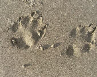 DOG Paw prints in the sand Photo Card Handmade